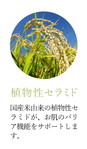 植物性セラミド